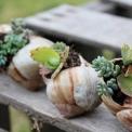 4 cách tạo khu vườn mini cho căn nhà của bạn